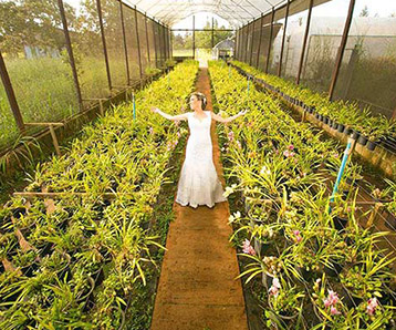 Convite de casamento em brasilia - Espaço Florativa